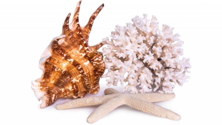 Picture of sharp coral and shell